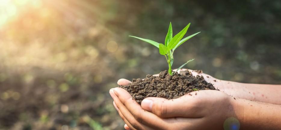 Komposztálás – Koppintsuk le az erdőt!