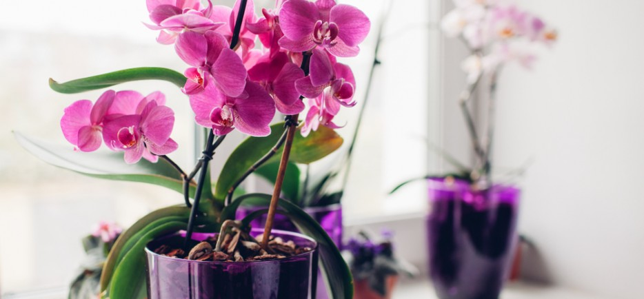 A lepkeorchideák őszi-téli ápolása