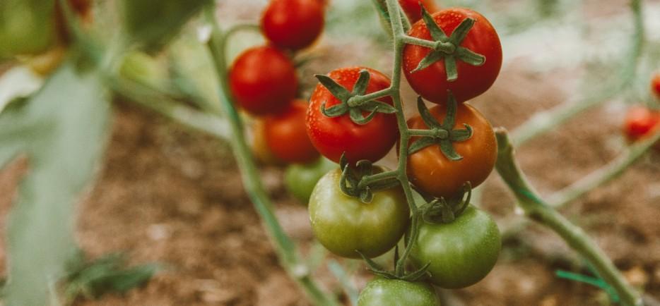 A veteményes terményeinek sokszínű felhasználása