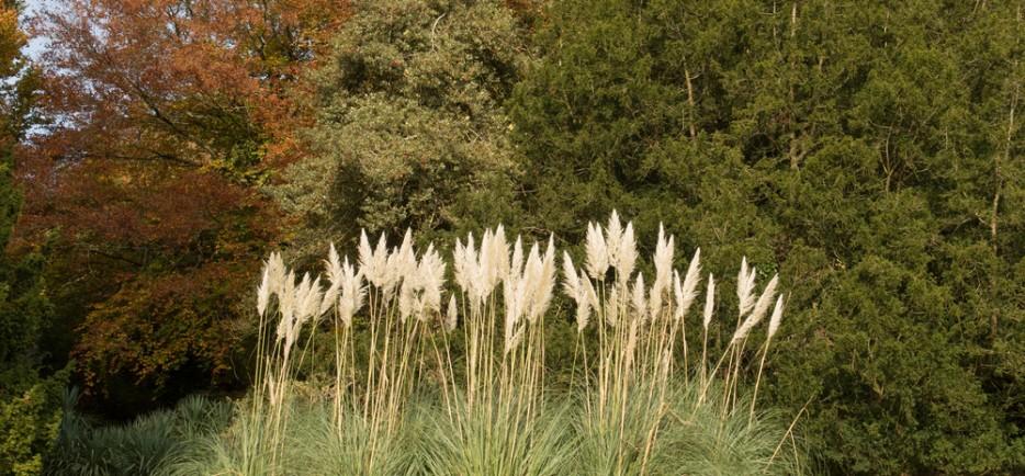A legizgalmasabb évelő díszfüvek a kertbe