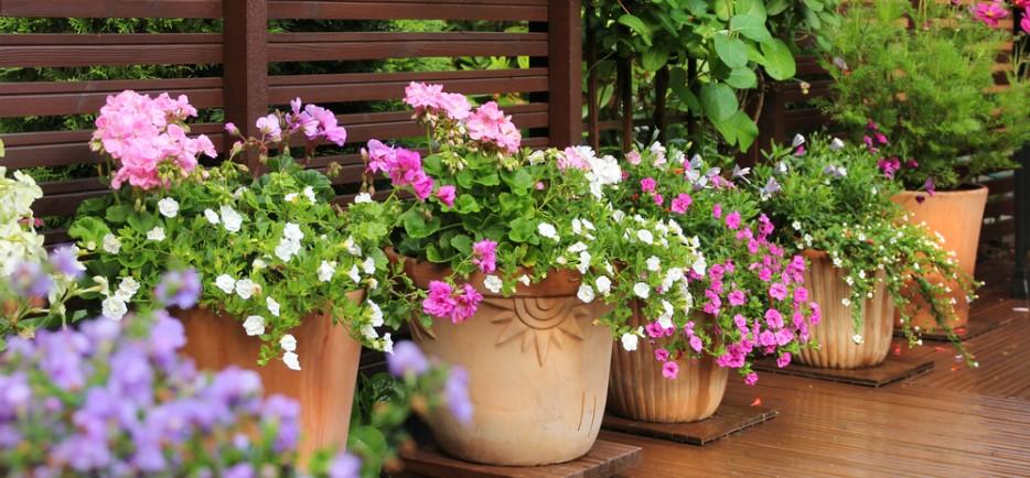 6+1 balkonnövény, hogy idén a miénk legyen a legvirágosabb terasz