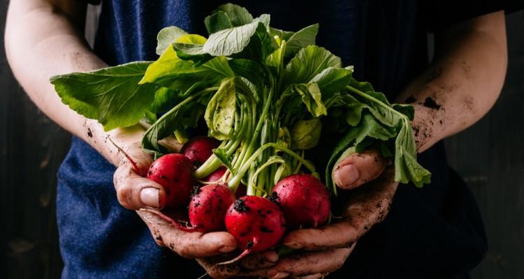 5 zöldség, amit már márciusban vethetünk szabadföldbe