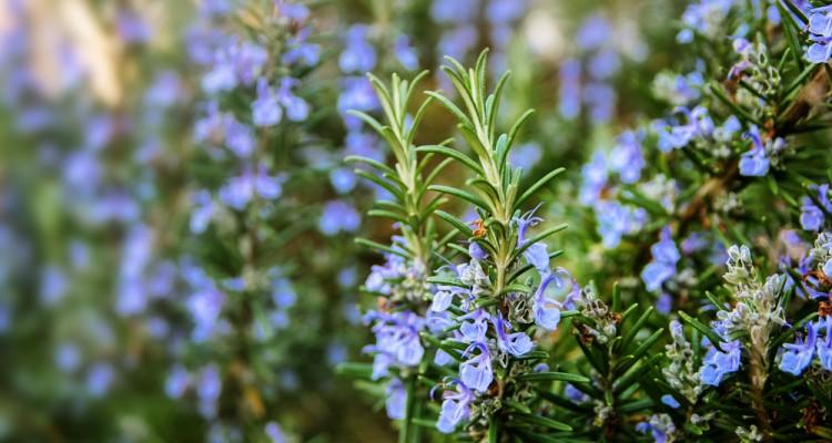 Növények a kert déli fekvésű, napos részében