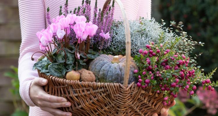 6 télálló dísznövény a teraszra és az ablakpárkányba
