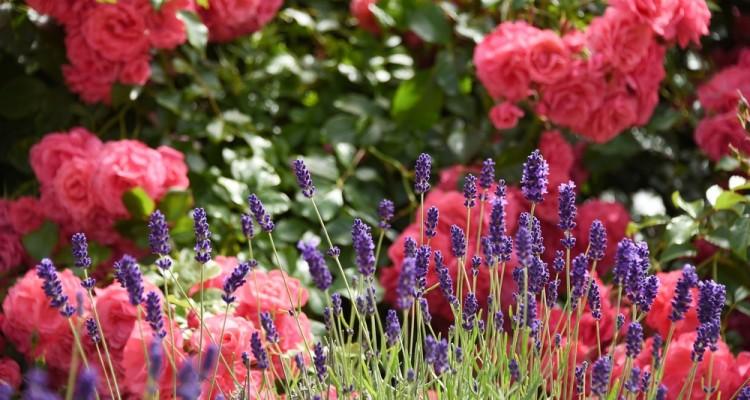Vegyszermentes növényvédelem, növénytársítások