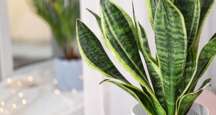 6+1 növény, ami tisztítja a lakás levegőjét