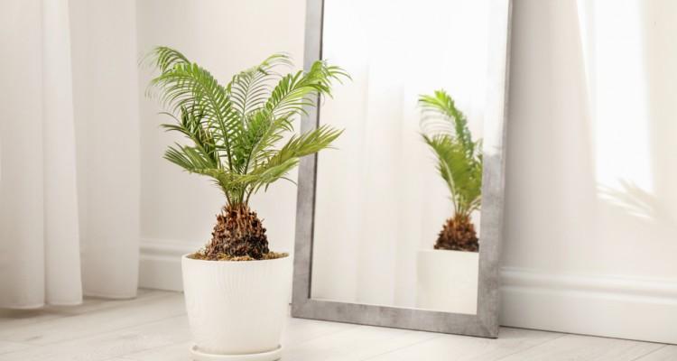 5+1 szobanövény, ami jól bírja a szárazságot