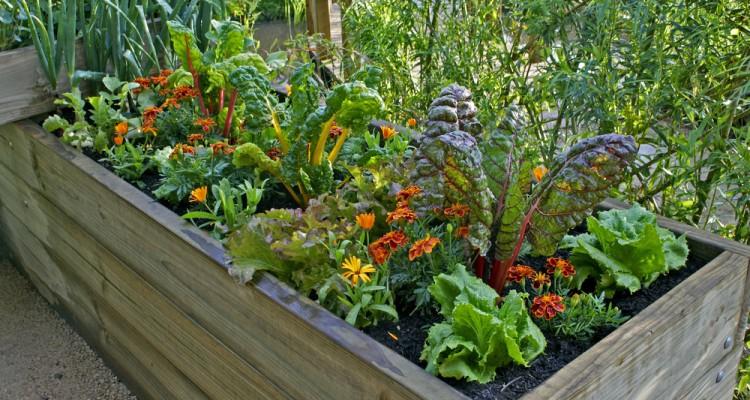 Növénytermesztés a magaságyásban egész évben