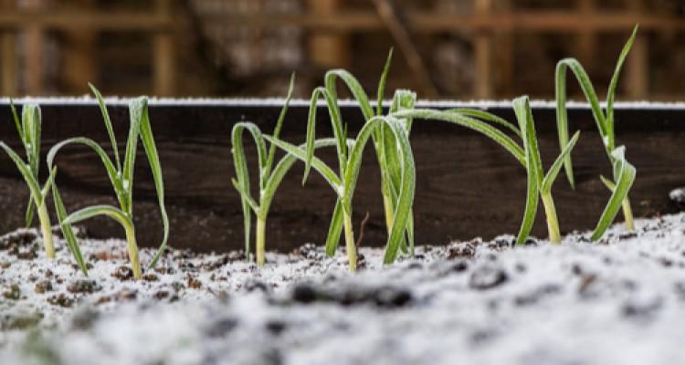 Ősszel is magaságyás - télálló zöldségfélék