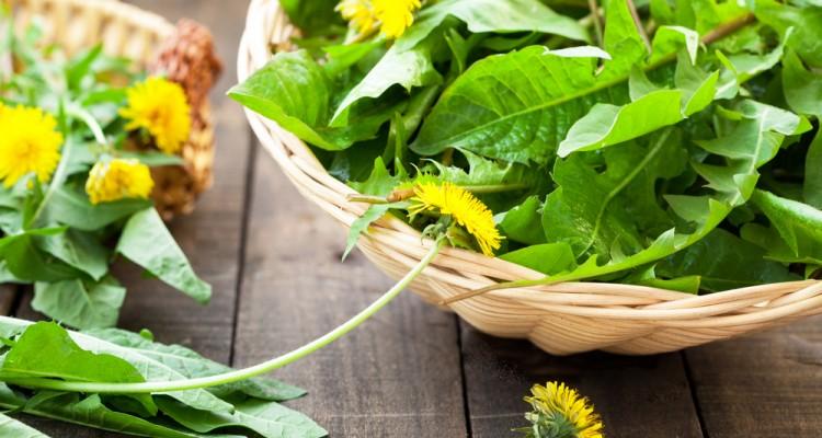 7+1 gyomnövény, amit felhasználhatunk a konyhában