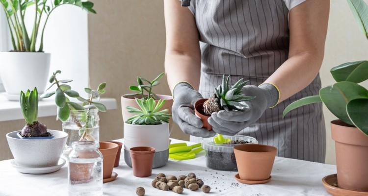 A szobanövények 4+1 szaporítási módja