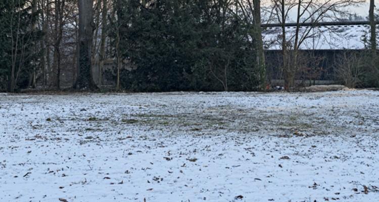 A téli gyep